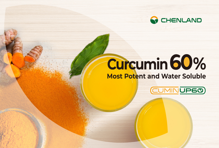 , Curcumin 101: Learning How to Make the Best Curcumin Supplement for Your Health, chenland, chenland