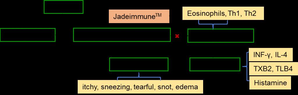 , JadeimmuneTM relieves Allergic Rhinitis -Mechanism of action, chenland, chenland